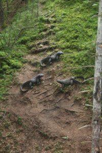 3 varani con suricate